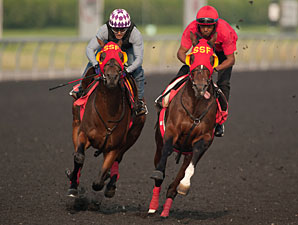 Up With the Birds and His Race to Win - Woodbine July 3, 2013