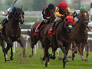 Up With the Birds wins the 2014 Nijinsky Stakes.