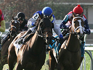 Upperline wins the 2011 Allen Lacombe Memorial Handicap.