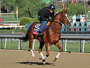 Vagabond Shoes - 2013 Breeders' Cup, October 29, 2013.