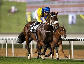 Vercingetorix wins the 2015 Al Rashidiya.