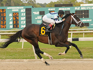 Verrazano wins the 2013 Tampa Bay Derby.