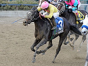Vicki's Dancer wins the 2013 New York Stallion Series Stakes.