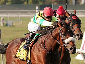 Violon Sacre wins the 2010 PTHA Presidents Cup.