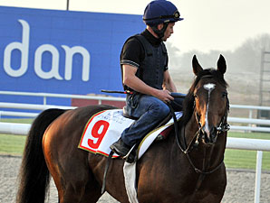 Vision d'Etat Dubai World Cup Week 2010.