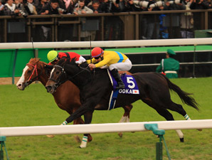 Vodka Scores Popular Victory in Japan Cup