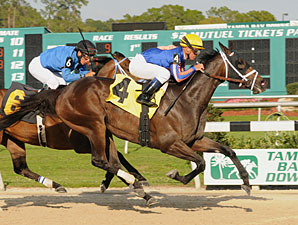 Wait Til Dawn wins the 2012 Suncoast Stakes.