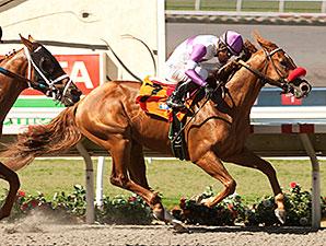 Wake Up Nick wins the I'm Smokin Stakes.