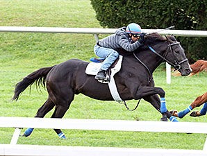 War Dancer at Keeneland, October 9, 2014