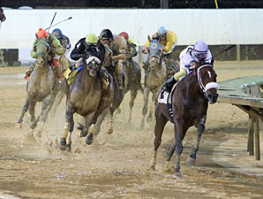 Wardelle wins the 2013 Pink Ribbon Stakes.