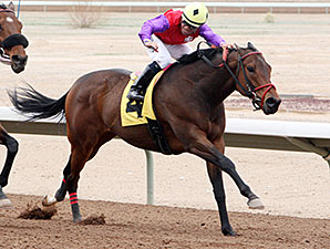 Warren's Knockout wins the 2014 Inaugural Handicap.