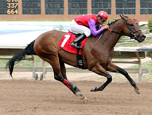 Warren's Knockout wins the Budweiser Special Stakes.