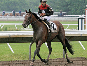 Way With Words wins the 2010 Open Mind Handicap.
