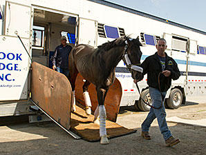 We Miss Artie arrived at Woodbine for the Queen's Plate on 07/03/2014