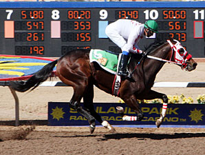 Weeping Aly wins the 2013 Copper Top Futurity Colts & Geldings 2nd Division.
