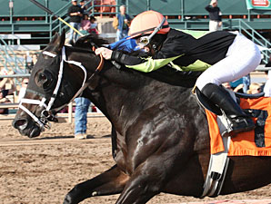 Why Not Be Perfect wins the Hank Mills Sr Handicap.