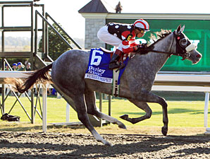 Wickedly Perfect wins the 2010 Darley Alcibiades.