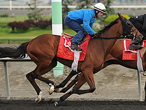 Wild Catomine preps for the 2014 Woodbine Oaks