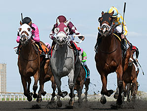 Wild Catomine wins the 2014 Fury Stakes.