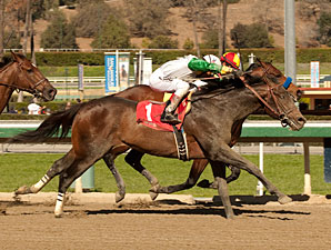 Wild Dude wins the Palos Verdes Stakes.