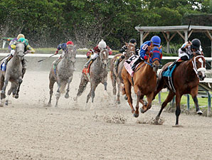 Wildcat Lily wins the 2013 Azalea Stakes.