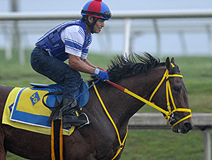 Wildcat Red breezes at Gulfstream Park June 22, 2014.