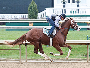 Will Take Charge works at Churchill Downs on November 16, 2013.