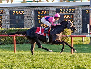 Willcox Inn wins the 2011 Hawthorne Derby.