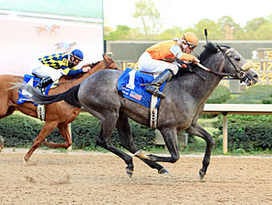 Win Willy wins the 2011 Oaklawn Handicap.