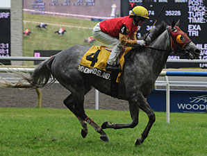 Windward Islands wins the 2010 Nijinsky Stakes.