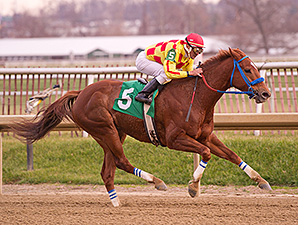 Winning Image wins the Willa on the Move Stakes.