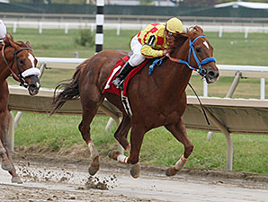 Winning Image wins the 2014 Cornucopia Stakes.