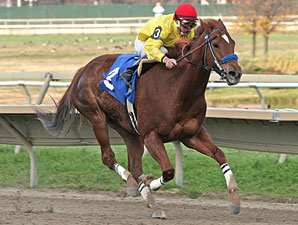 Winning Image wins the 2011 Cornucopia Stakes.