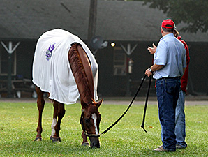 Wise Dan grazes after a big weekend September 1, 2014.