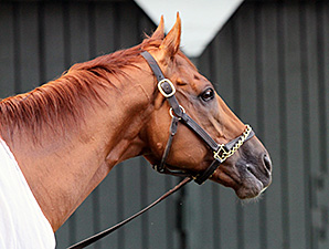 Wise Dan a few days after his Bernard Baruch win, September 1, 2014.