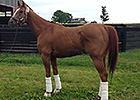 Wise Dan's Homecoming May 21, 2014