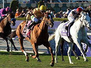 Wise Dan wins the 2013 Breeders' Cup Mile.