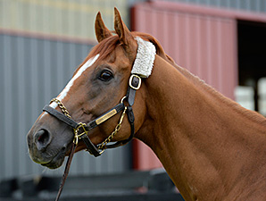 Wise Dan arrives home May 21, 2014 following Colic surgery.
