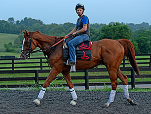 Wise Dan jogged at Keeneland on July 1, 2014