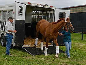 Wise Dan Returns Home after colic surgery, May 21, 2014.