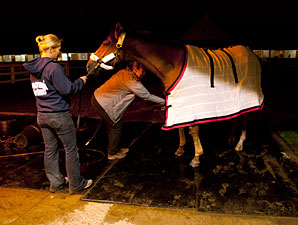 Wise Dan - Woodbine, September 13, 2013.