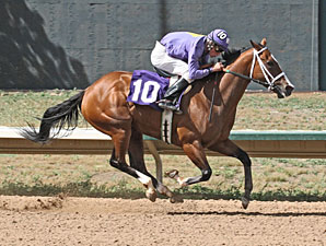 Wizardry wins the 2013 Molly Brown Stakes.