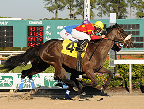 Wyomia wins the 2011 Suncoast Stakes.