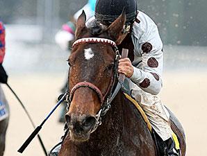 Yahilwa wins the 2014 Treasure Chest Stakes.