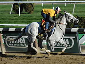 Za Approval - Belmont Park, October 26, 2013.