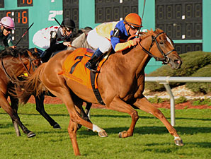 Zagora wins the 2012 Hillsborough.