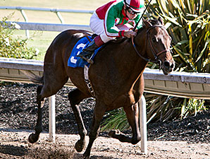 Zeewat wins the 2012 Cavonnier Juvenile Stakes.