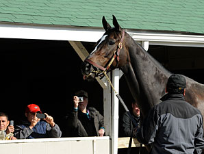 Zenyatta arrives at Churchill Downs on November 2, 2010.