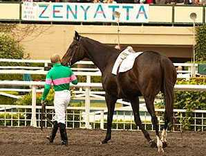 Zenyatta and Mike Smith's final stroll at Hollywood Park.