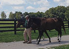 Zenyatta and 2014 War Front Foal at Lane's End